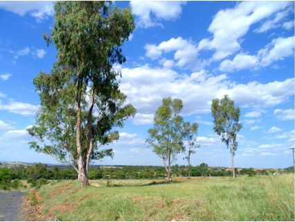 R 80,000,000 -  Land For Sale in Pinehaven