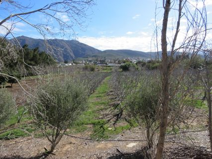 R 2,300,000 -  Land For Sale in Montagu